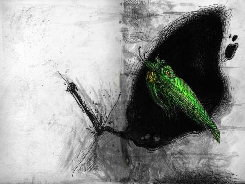 Ein grünes Insekt